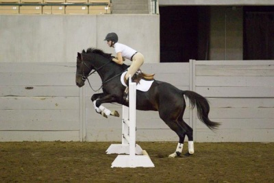 EquiFest hosts pleased with large turnout