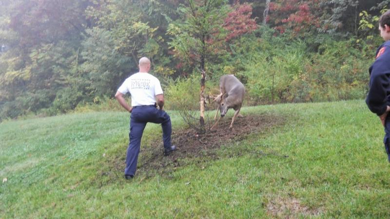 FIRE & RESCUE REPORT: Crews save deer caught in rope