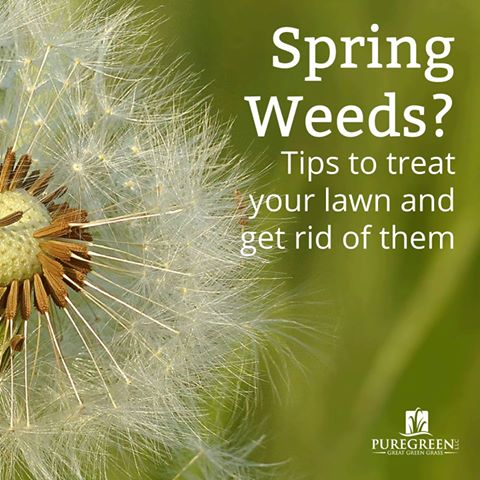 Identifying (and getting rid of) spring weeds