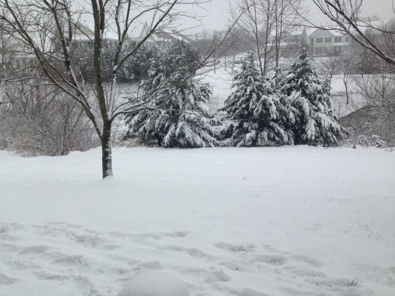 All calm in Williamson County despite snow forecast